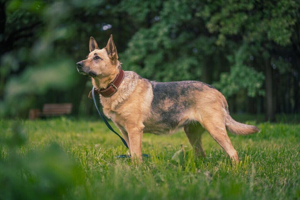 Энергичная собака Вита из приюта «Дубовая роща» ищет хозяина