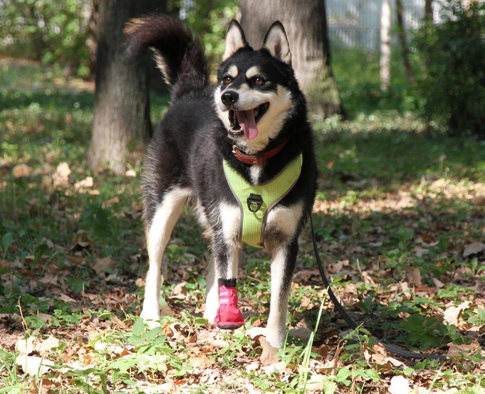 Ищет дом особенный пес Ричард из приюта «Дубовая роща»
