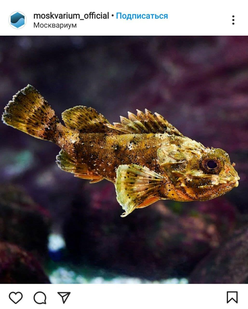 Специалисты океанариума на ВДНХ сообщили интересные факты о черноморской рыбе